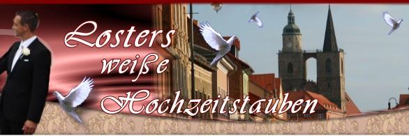 Losters Weisse Hochzeitstauben Weisse Tauben In Berlin Potsdam Und
